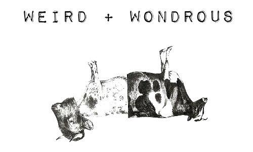 5 Weird & Wondrous Singles